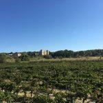 Chateau de Seriege Vignes